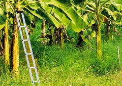 Escalera agrícola en aluminio